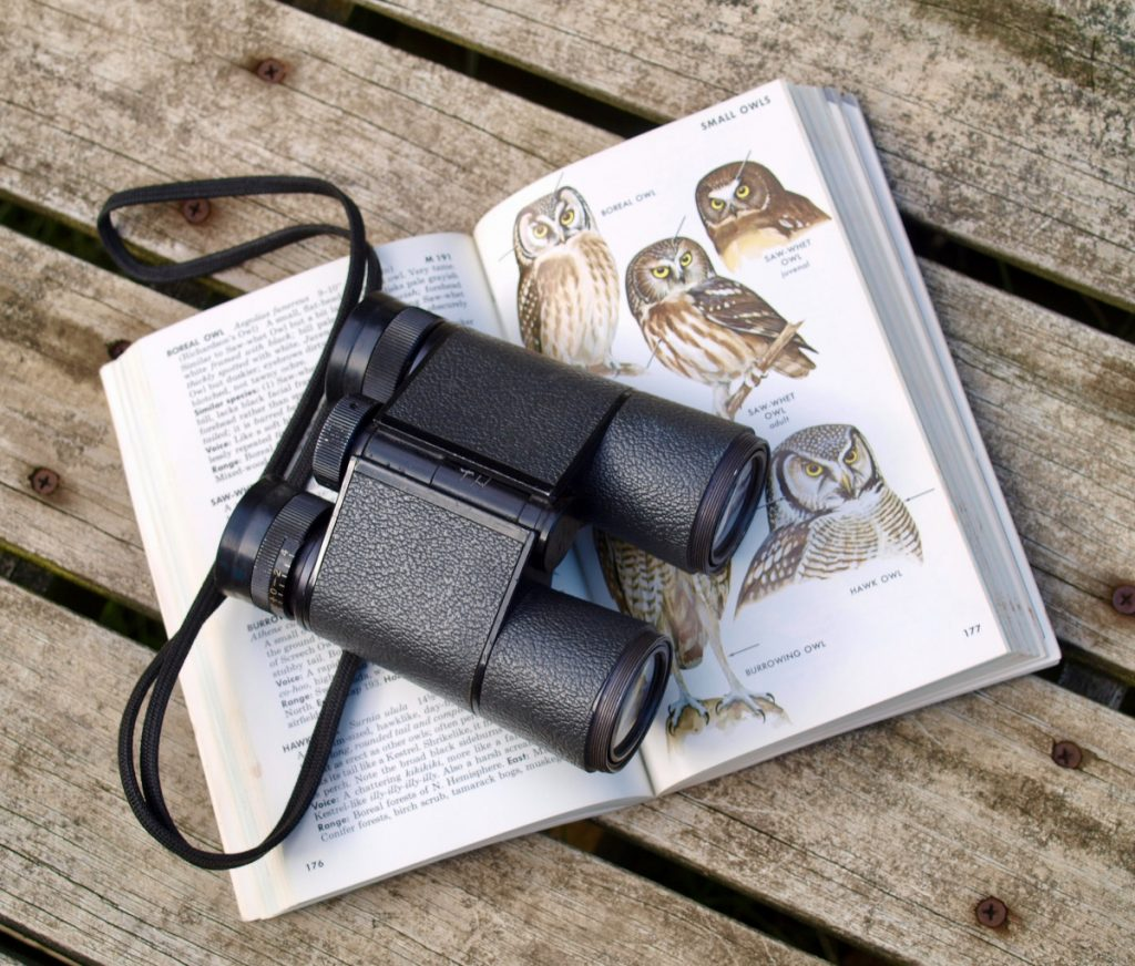 Explorer Time in Cruise & Komodo Park: Binoculars