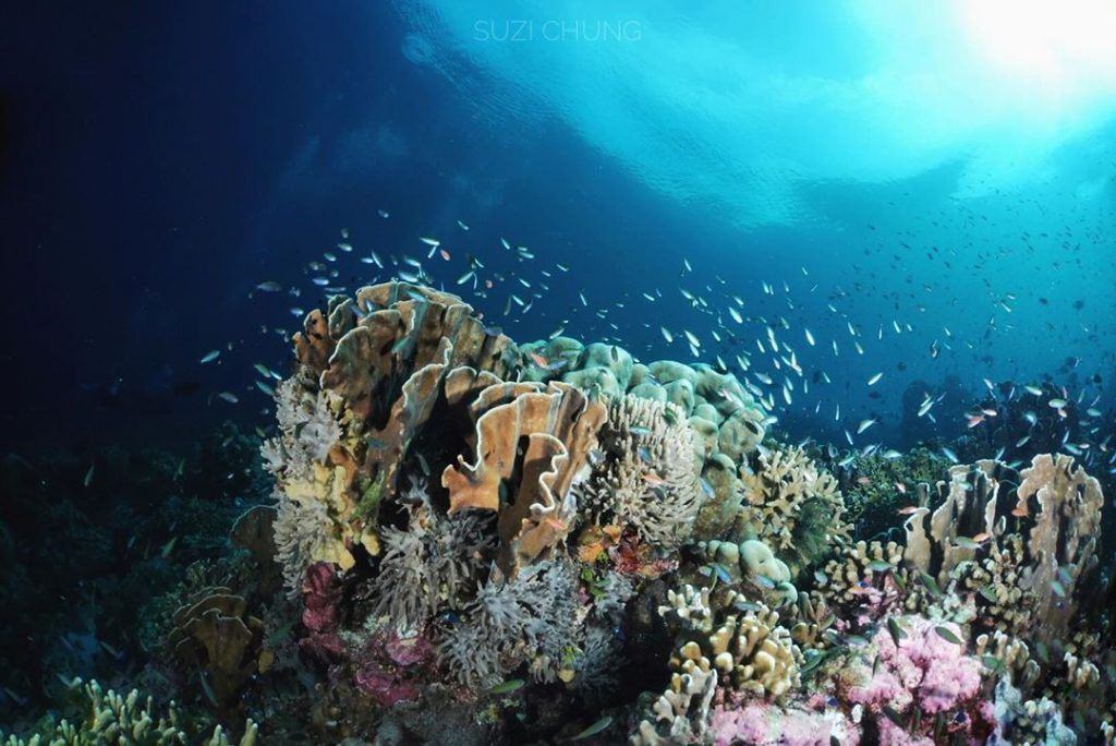 Diving the Amazing Banda Sea!