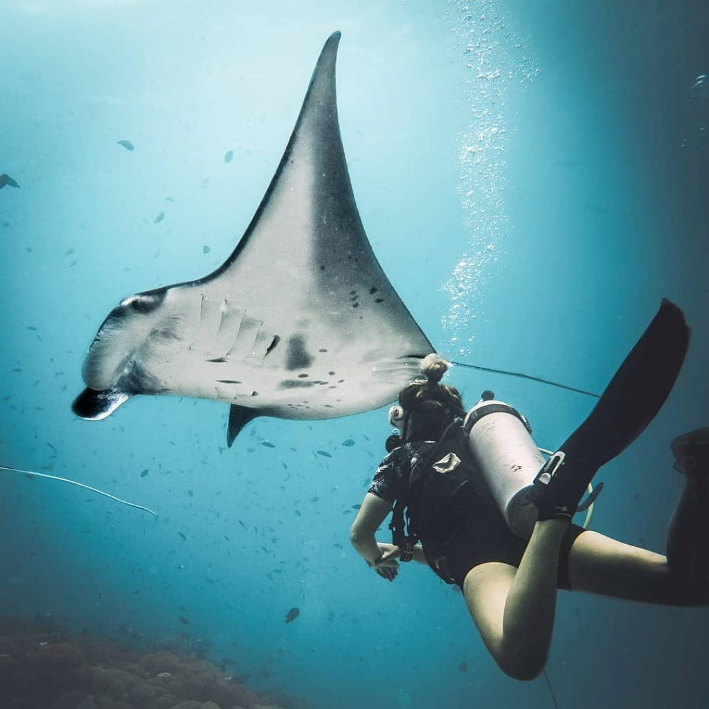 Pro Tips to See Manta Ray Nusa Penida!