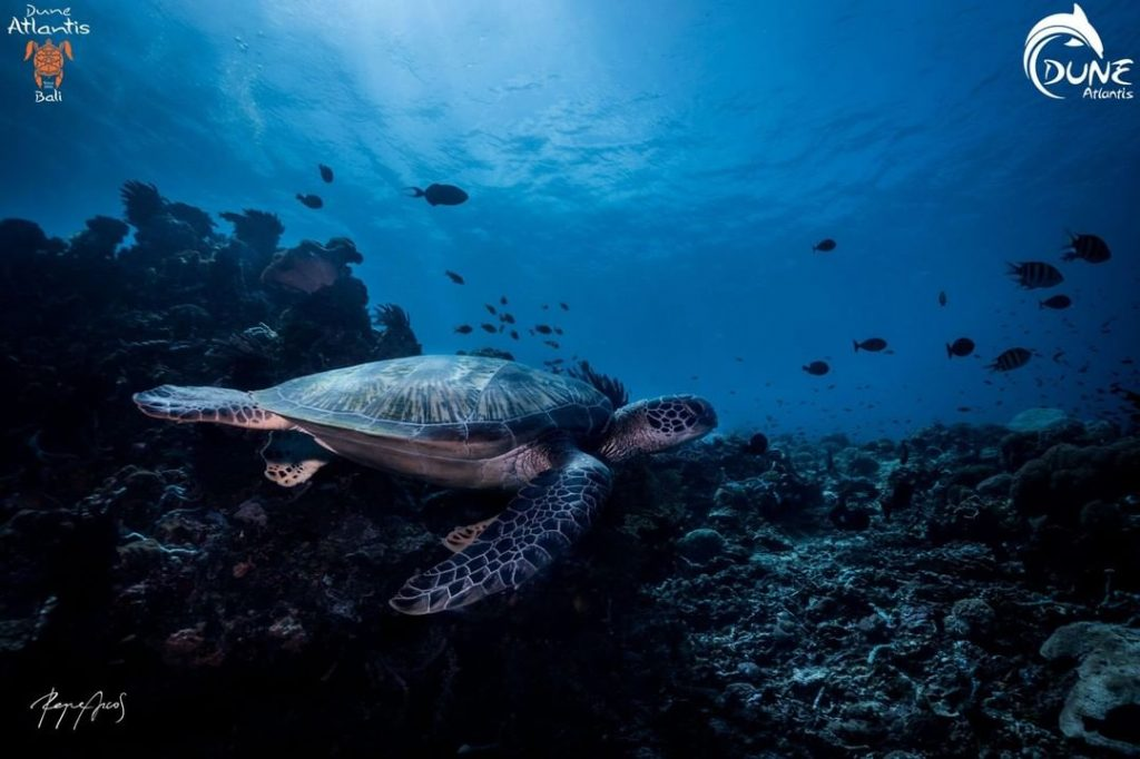 Best Places for Scuba Diving in Bali by Animal Interest