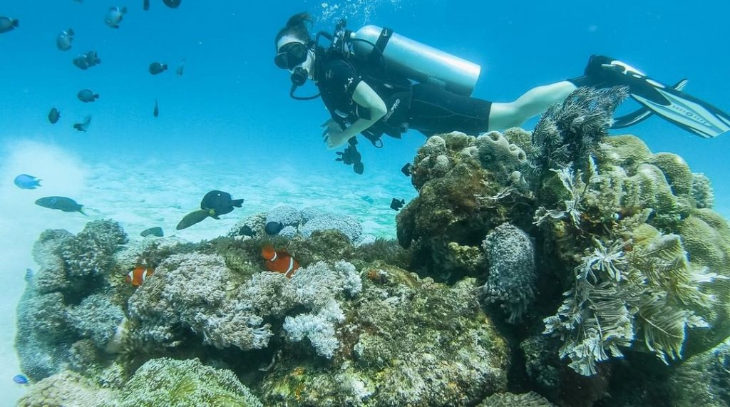 What You Should Prepare for A Scuba Diving Trip to Komodo