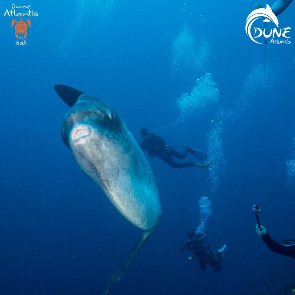 Seeing Mola Mola in Nusa Penida
