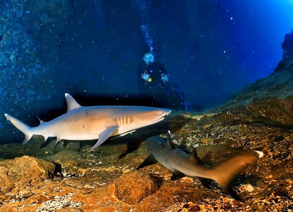 ili Biaha: The Shark Cave